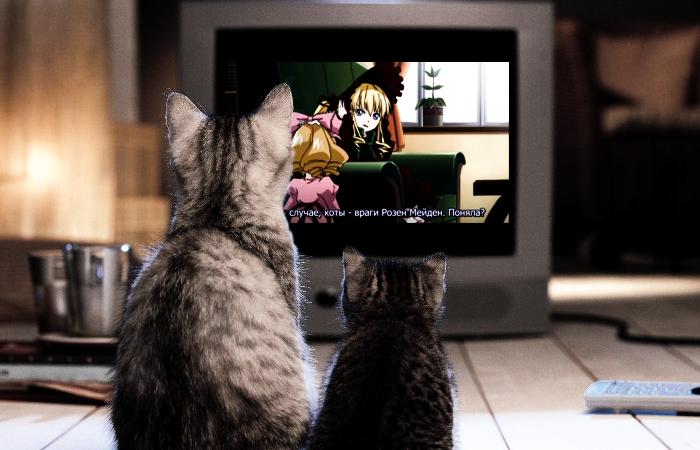 Civico20 news perch il gatto ama guardare la tv for Guardare la tv